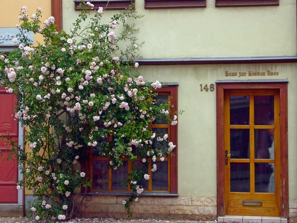 Haus 'Kleine Rose' (eigenes Bild)