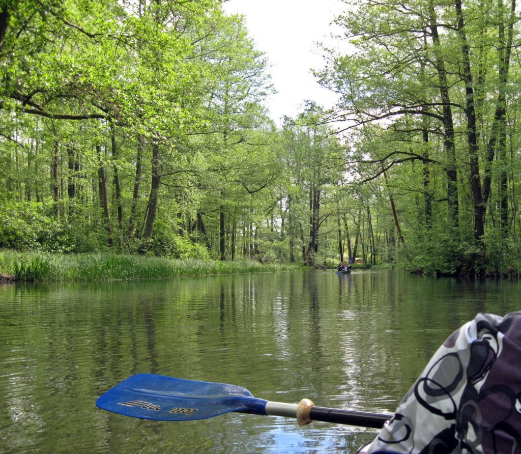 Paddeln im Spreewald (eigenes Bild)